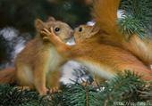 Puzzle gratuit écureuils par hélène