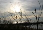 Puzzle Roseaux, océan, coucher de soleil