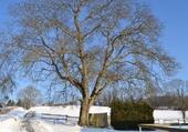 Puzzle février 2012 - Oron-la-Ville