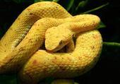 Puzzle Serpent par hélène