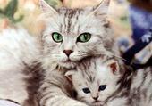 Jeu puzzle amour de chats