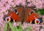 Jeux de puzzle : papillon