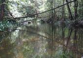 Puzzle paysage forête equatoriale