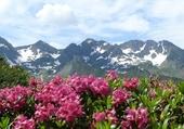 Puzzle gratuit rhododendron