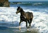Jeu puzzle cheval dans l eau