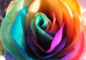 Puzzle en ligne rose multicolore