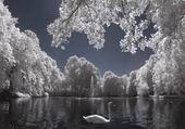 Puzzle le lac des cygnes