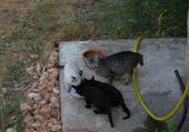 Jeux de puzzle : 4petits-chatons
