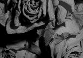 Puzzle gratuit rose grise