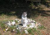 Pilou le chat