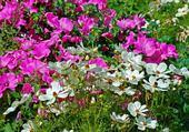 Puzzle Puzzle fleurs