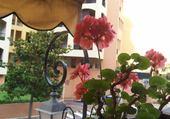 Jeux de puzzle : balcon fleuri