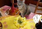 Jeu puzzle Kitty