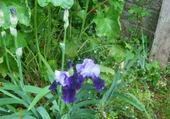 Puzzle en ligne iris
