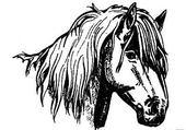 Jeu puzzle cheval76