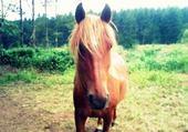 Jeux de puzzle : mon cheval