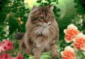 Jeux de puzzle : La beauté faite chat