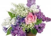 Jeu puzzle bouquet de lilas
