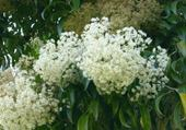 Jeu puzzle Fleurs blanches par h