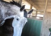 Puzzle gratuit chevaux pour la vie