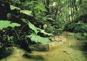 Puzzle forêt amazonnienne - Equateur