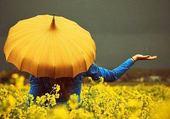 Puzzle umbrella