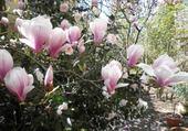 Jeu puzzle Magnolia
