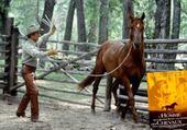 Puzzle R. Redford et cheval