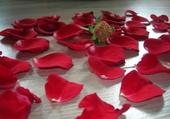 Puzzle pétales de rose