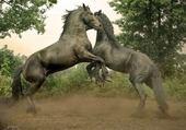 Puzzle gratuit cheval de reve