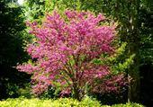Puzzle arbre en fleurs