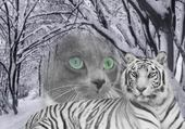 Puzzle canaille et le tigre