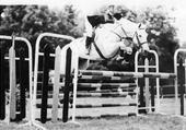 Mon cheval Emilio