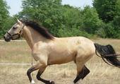 mon beau cheval filou