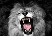 Puzzle le lion