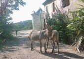 les ânes de Tourris