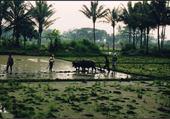 île de Java - Indonésie