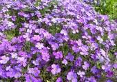 Puzzle champ de fleurs