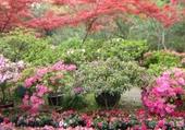jardin en chine
