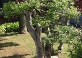 Jardin des BONZAÏ