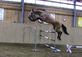 Puzzle cheval-horse