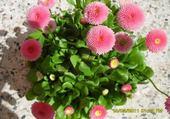 fleurs par hélène