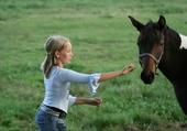 cheval farouche
