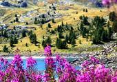 Fleurs en montagne