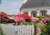 Puzzle Hortensias en Bretagne