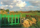 barrière verte dans les champs