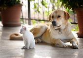 gros chien et petit chat