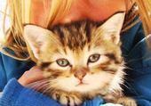 fillette et chaton