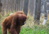 Puzzle zoo amneville