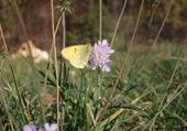 Puzzle papillon d'automne